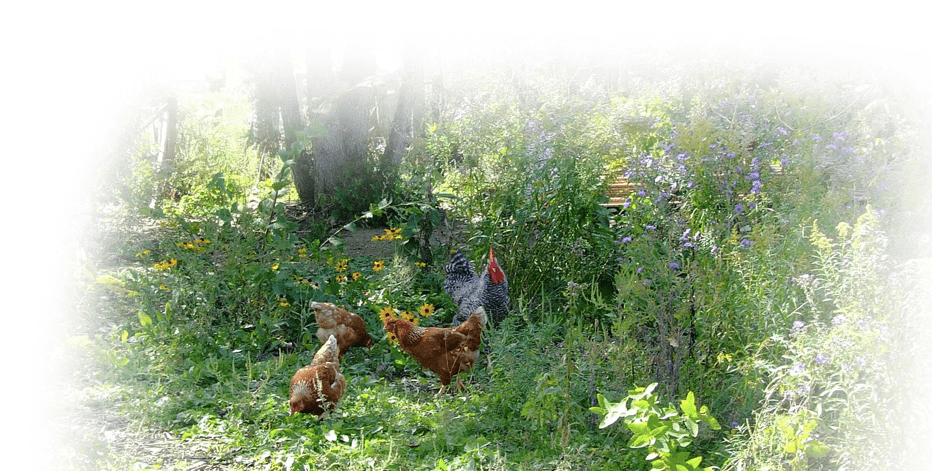 Our Farm History